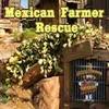 Mexican Farmer Rescue