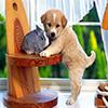 Rabbit vs Dog