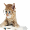 Cute Cat With Glasses Puzzle