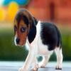 Cute Little Puppie